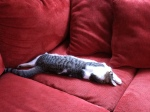 Sleeping cat on couch