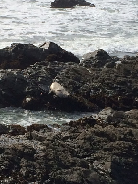 Moonstone Beach Seal