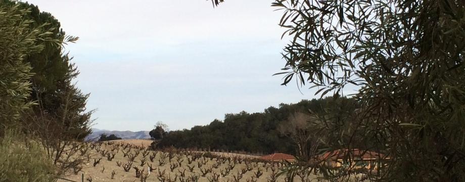 Paso Robles Vines